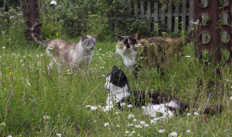 trzy koty zdjęcie royalty free