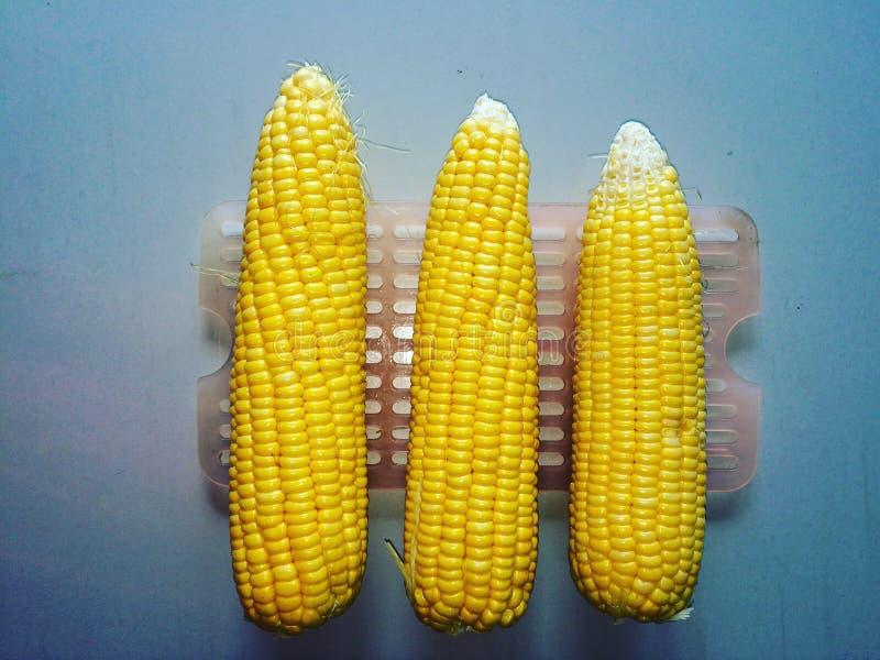 Trzy kukurudzy obrazy royalty free