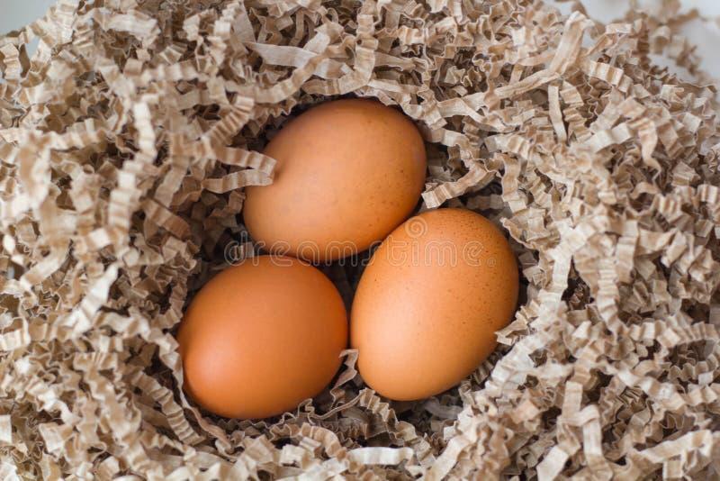 Trzy kurczaka jajka w kartonowym trociny fotografia stock