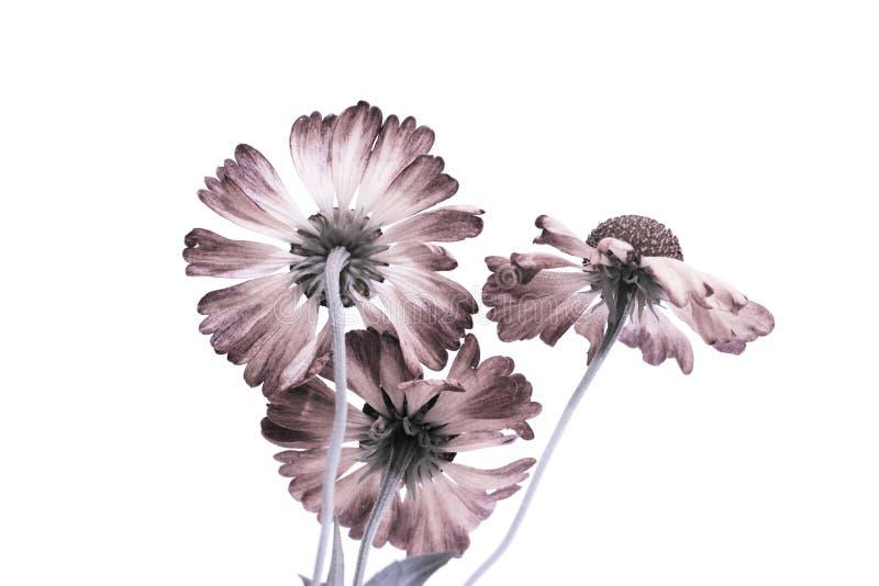 Trzy kwiat na białym tle komputer - zasadzony poczta przerób zdjęcia stock