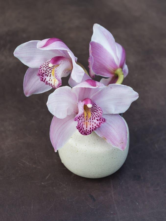 Trzy kwiatu orchidea w małej ceramicznej wazie na brown półdupki obraz stock