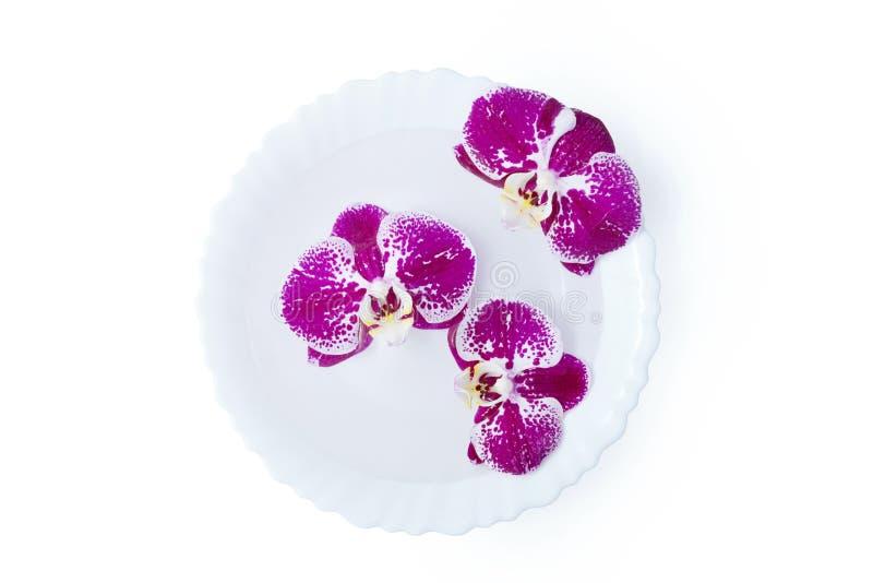 Trzy kwiatu różowe orchidee w białym talerzu odizolowywającym zdjęcie stock