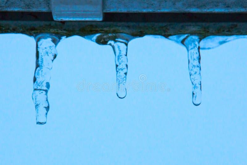 Trzy małego sopla wiesza od dachu przeciw niebieskiemu niebu przy półmrokiem zdjęcie stock
