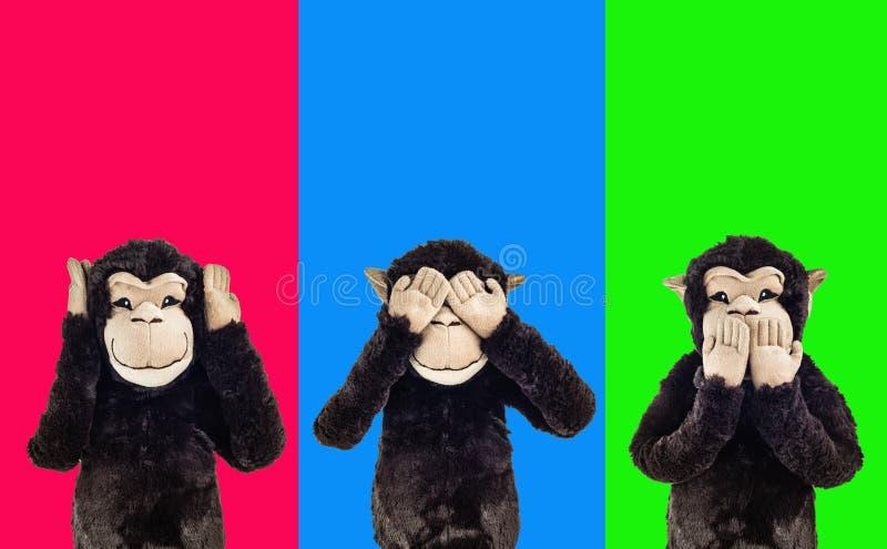 trzy małpy mądrych zdjęcia royalty free