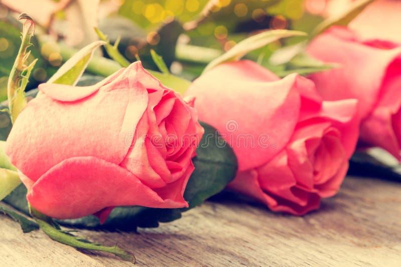 Trzy menchii róży kwiatu obraz stock
