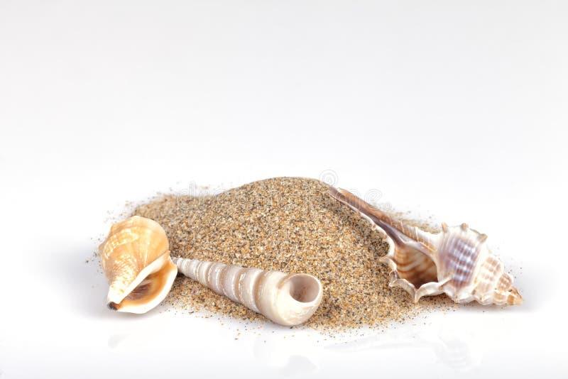 Trzy mollusk skorupy z plażowym piaskiem na białym tle fotografia stock