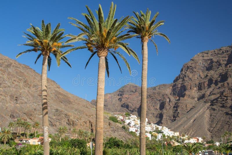 Trzy palmy i małej wioska los angeles Calera w Valle Gran Rey, los angeles Gomera zdjęcia stock