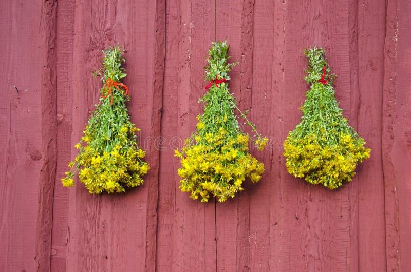 Trzy pięknego St Johns wort medycznej zielarskiej wiązki na czerwieni ścianie obrazy royalty free