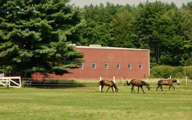 Trzy podpalanego konia chodzi w linii outdoors przed gęstymi drzewami fotografia royalty free