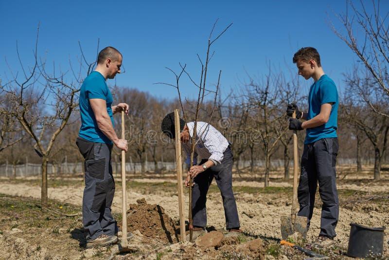 Trzy pokoleń rodzina zasadza drzewa wpólnie zdjęcia royalty free