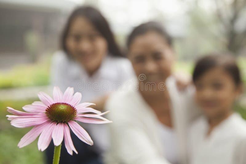 Trzy pokolenie patrzeje kwiatu w ogródzie obrazy stock