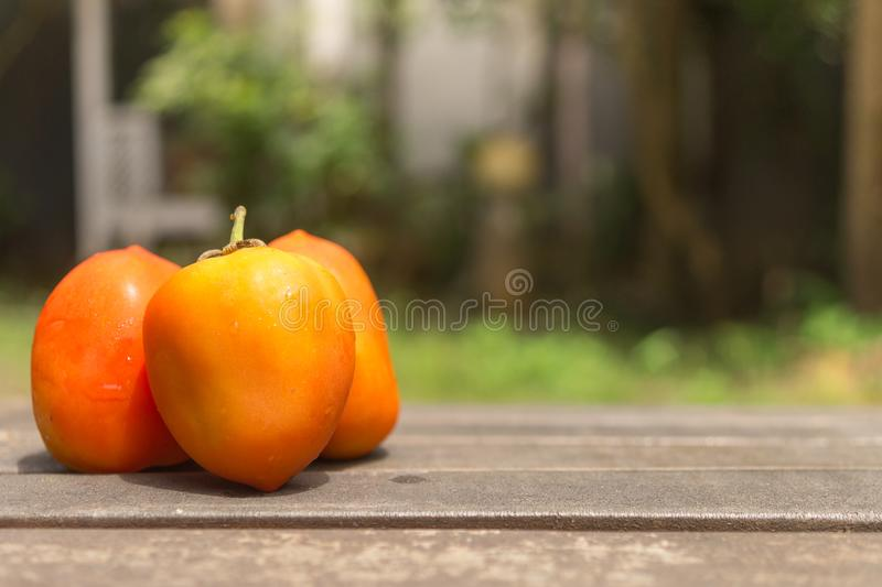 Trzy pomarańcz pomidor na drewno ziemi w zieleń ogródzie zdjęcia stock