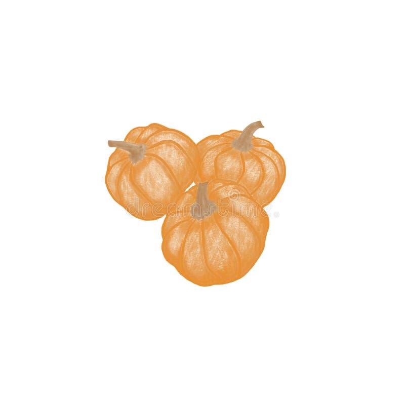 Trzy pomarańczowej bani na białym tle royalty ilustracja