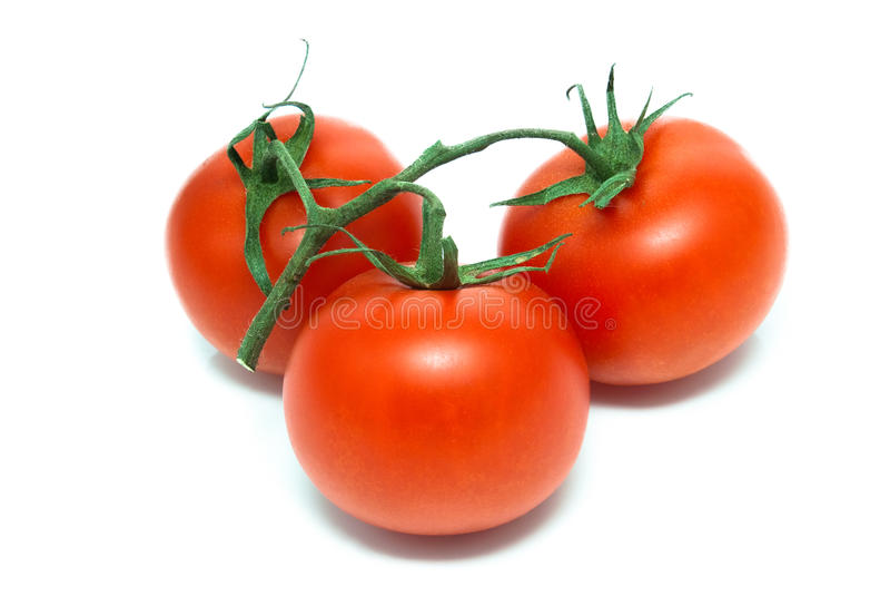 Trzy pomidoru na gałąź zdjęcia stock