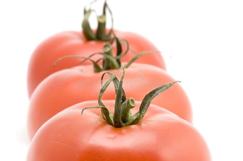 trzy pomidory obrazy stock