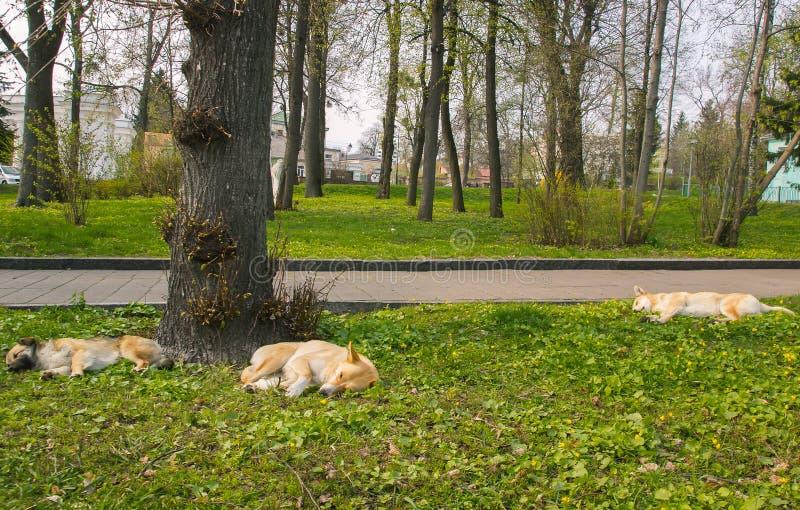 Trzy przybłąkanego psa na ulicznym sen zdjęcia stock
