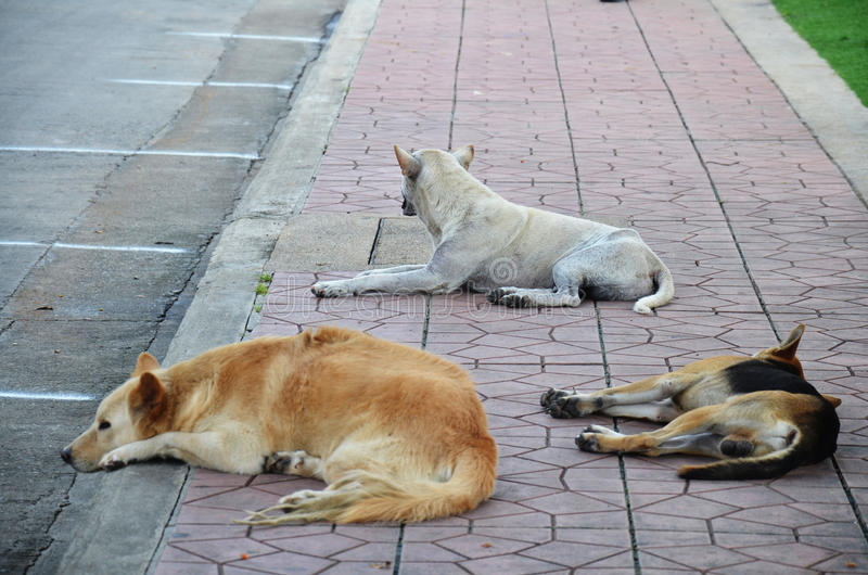 Trzy psów sen na ulicie fotografia stock