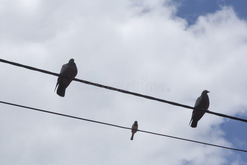 Trzy ptaka na telefonicznych drutach zdjęcie stock
