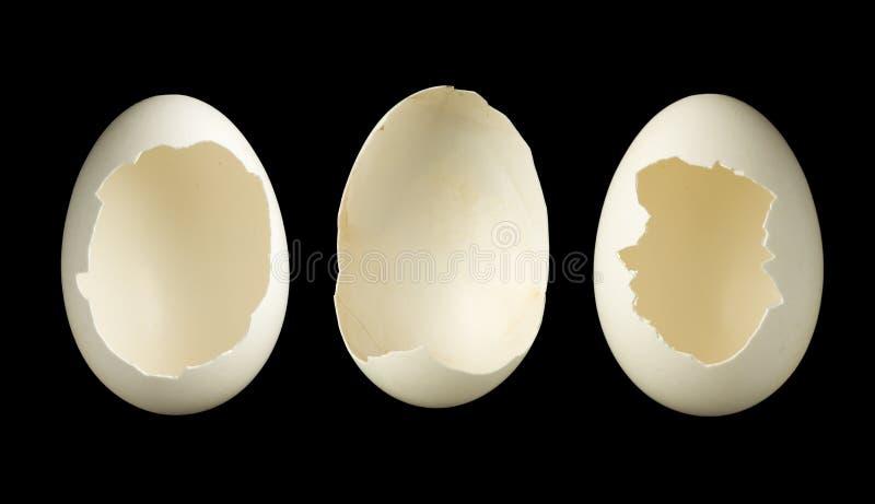Trzy pustego jajka zdjęcie royalty free