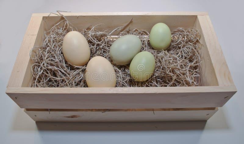 Trzy różnego barwionego Wielkanocnego jajka w drewnianym pudełku zdjęcia royalty free