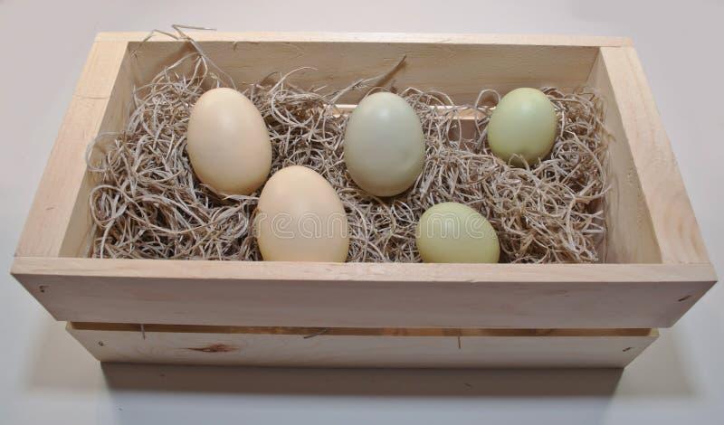 Trzy różnego barwionego Wielkanocnego jajka w drewnianym pudełku fotografia stock