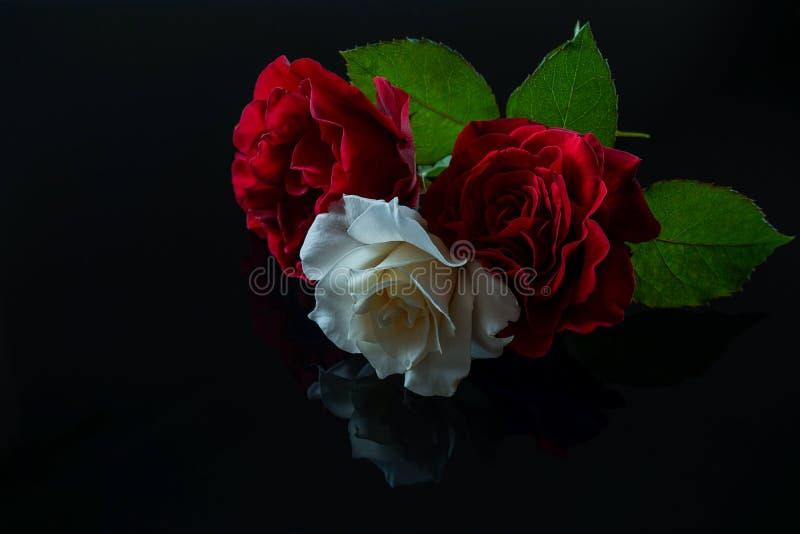 Trzy róży z odbiciem na czarnym szkle fotografia royalty free