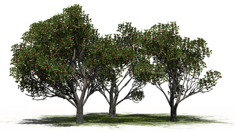 Trzy rewolucjonistka inaczej - wyśmienicie jabłonie z owoc royalty ilustracja