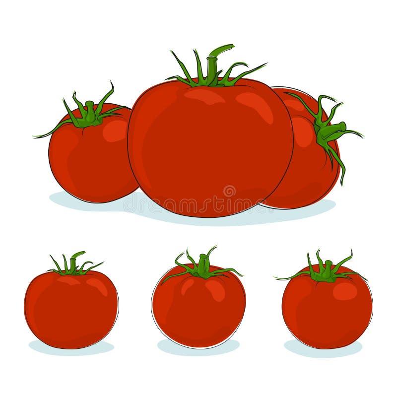 Trzy rodzajów czerwieni pomidor ilustracja wektor