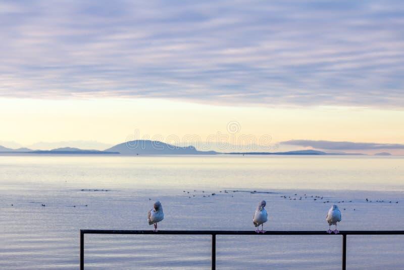 Trzy seabirds preen na ostro protestować obvlious wspaniały seascape behind obraz stock