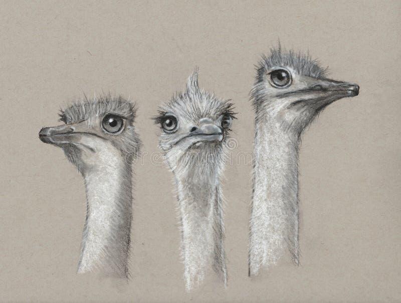Trzy strusia, węgiel drzewny sztuka, Śliczni, Necked ptaki, zdjęcia stock