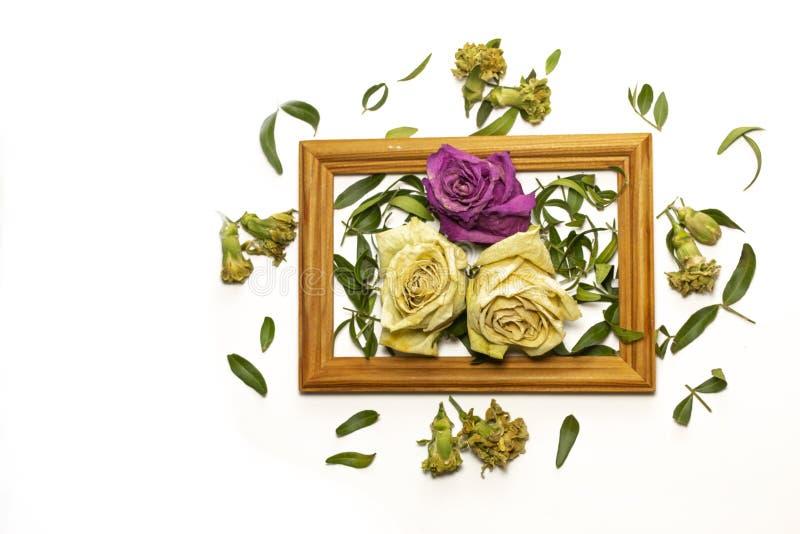 Trzy suchej róży z liśćmi, dwa białej róży obraz stock