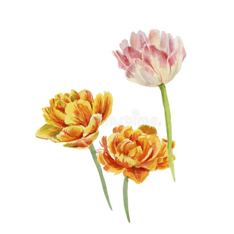 trzy tulipanu ilustracja wektor