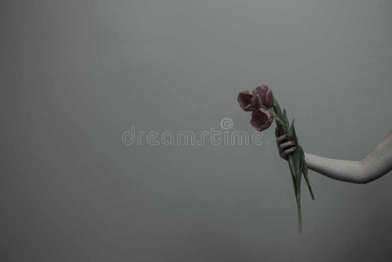Trzy wiosenne tulipany w kobiecej dłoni obraz stock