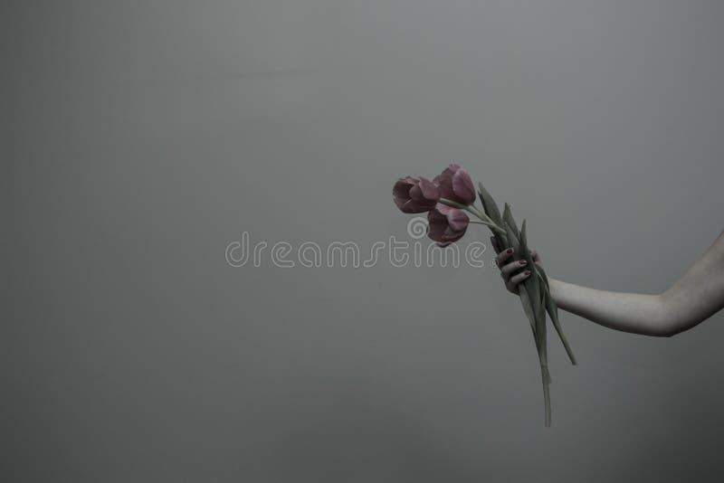Trzy wiosenne tulipany w kobiecej dłoni obraz royalty free
