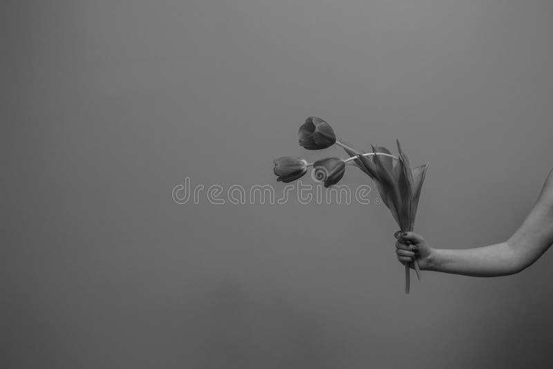 Trzy wiosenne tulipany w kobiecej dłoni obrazy stock