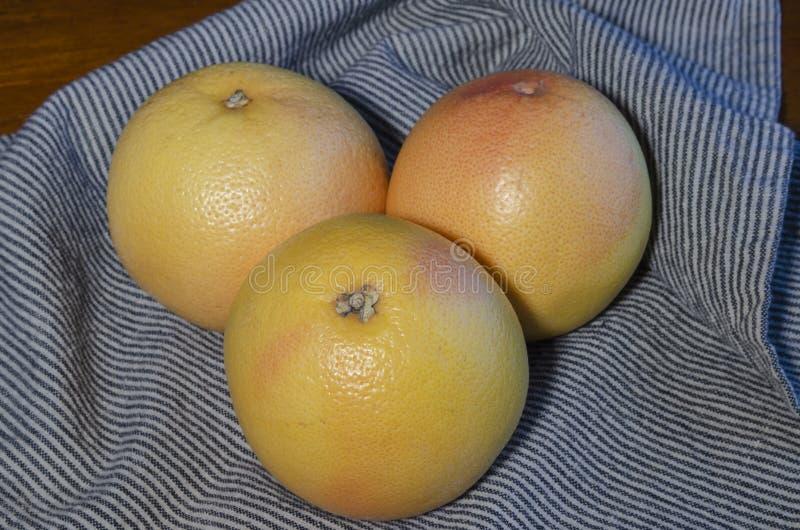 Trzy wyśmienicie rubinowego czerwonego grapefruits zdjęcia royalty free
