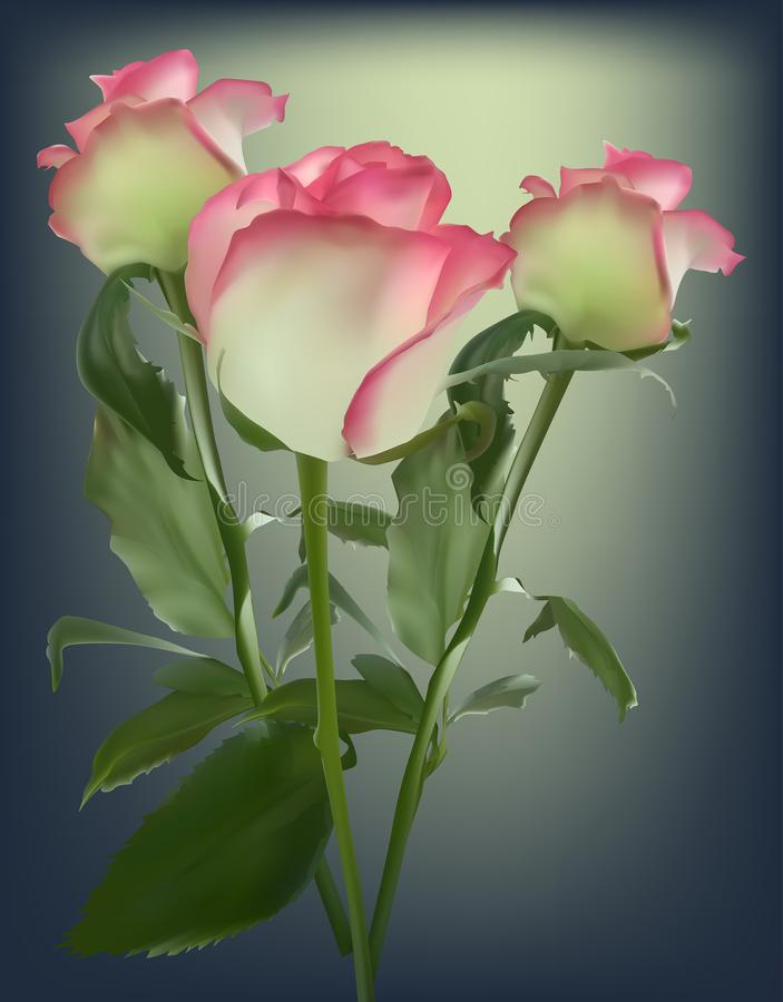 Trzy wzrastali kwiaty z menchii krawędzią na ciemnym tle ilustracja wektor
