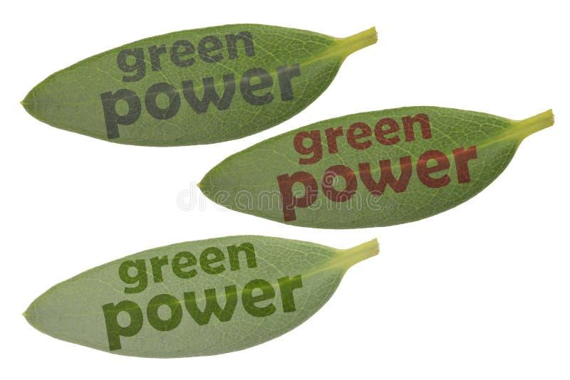 Trzy zielonego liścia i teksta gree władza w różnym kolorze i świetlistości zdjęcia stock