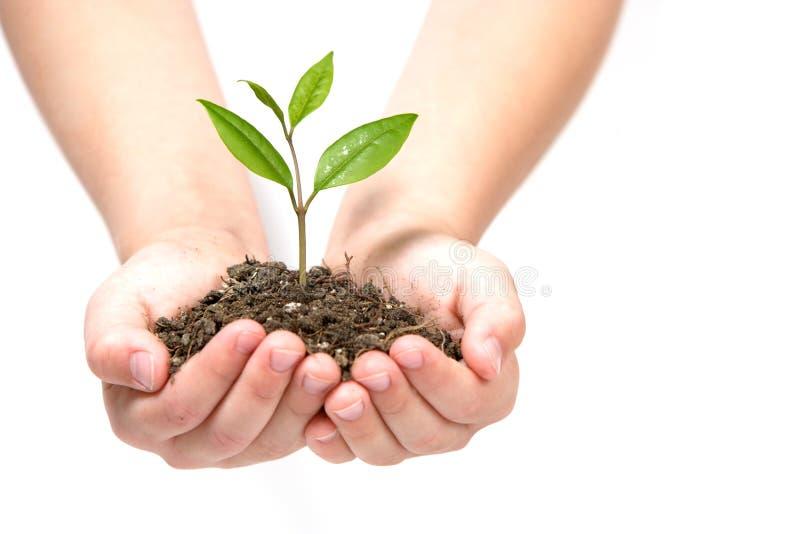 trzymając małe roślin obraz stock