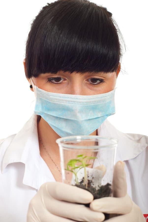 trzymający nowej rośliny naukowa kobiety młody zdjęcia stock