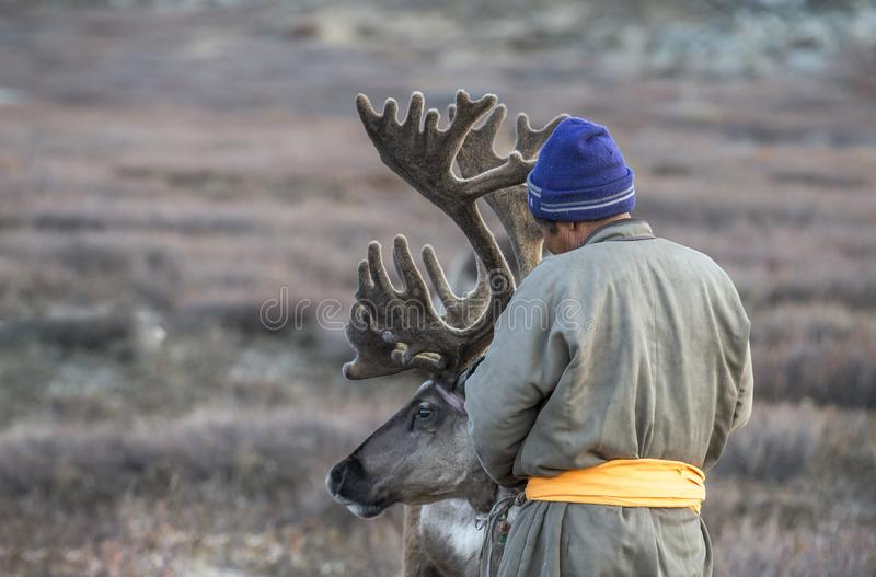 Tsaatan man, dressed in a traditional deel, with his reindeers stock image