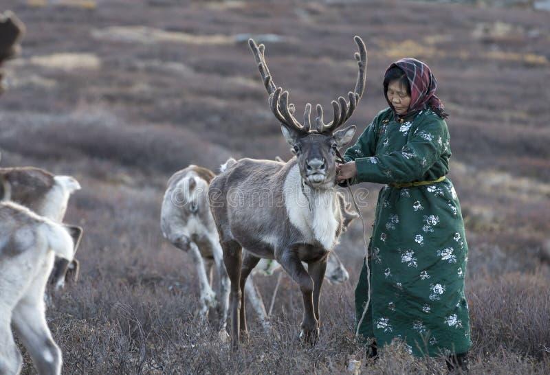 Tsaatanvrouw met rendier in Noordelijk Mongools landschap stock foto