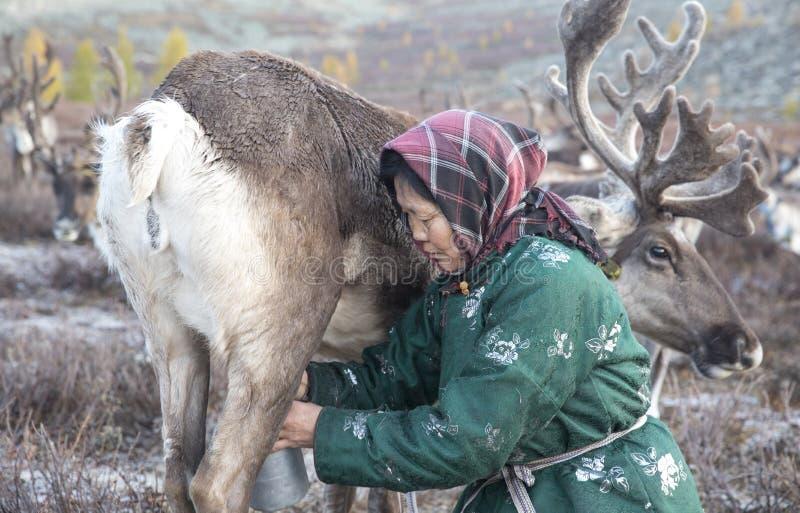 Tsaatanvrouw met rendier in Noordelijk Mongools landschap stock foto's