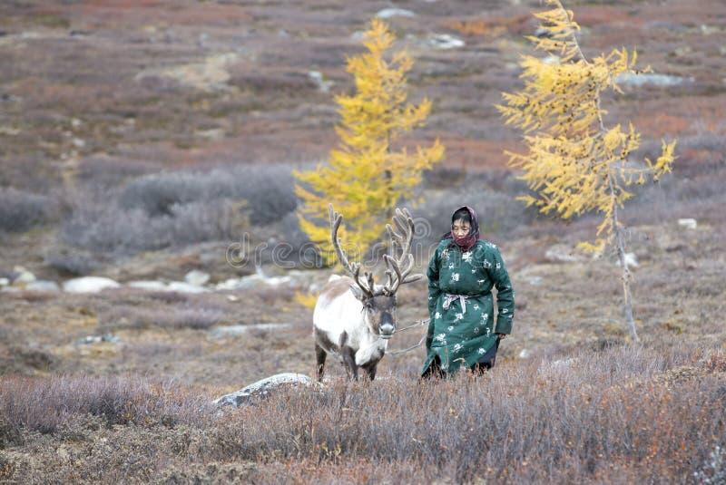 Tsaatanvrouw met rendier in Noordelijk Mongools landschap royalty-vrije stock foto