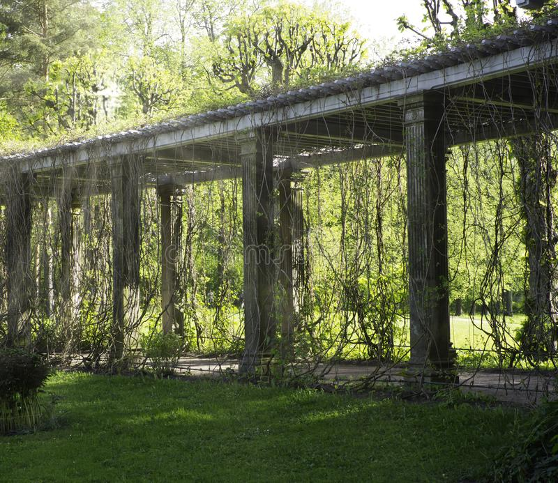 Old pergola-veranda in the Italian style twined with wild grapes at the Catherine Park in. TSARSKOE SELO, RUSSIA - May, 2019: Old pergola-veranda in the Italian royalty free stock photography