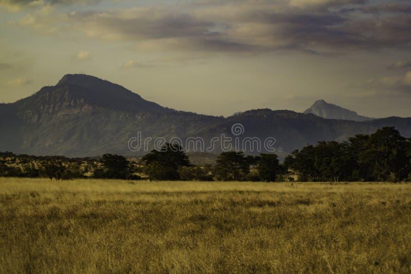 Tsavo parka narodowego zachodni krajobraz Kenja Afryka fotografia royalty free