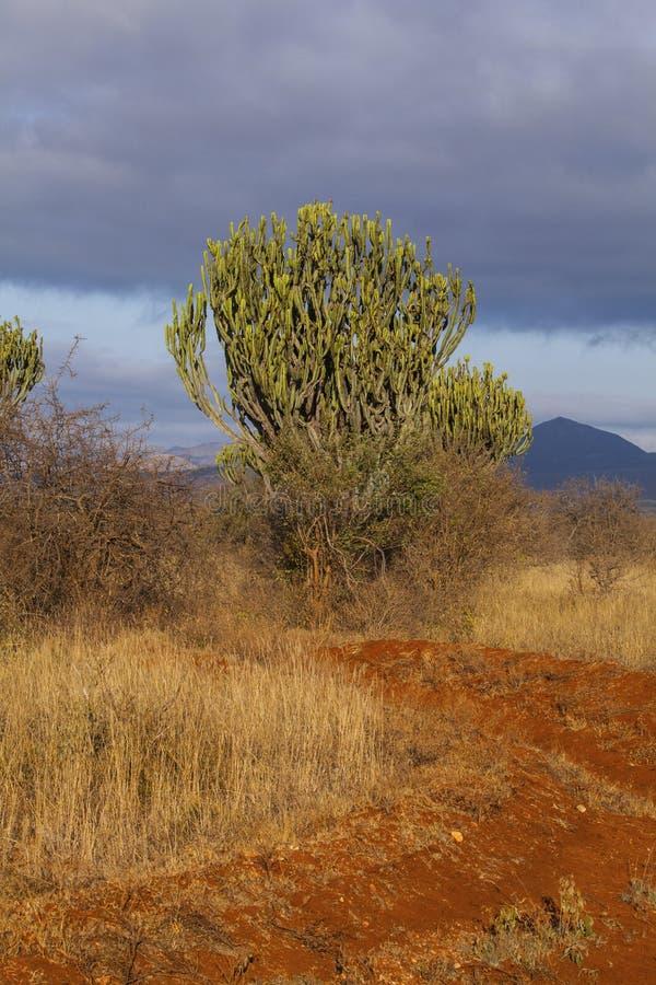 Tsavo West National Park in Kenya stock photo