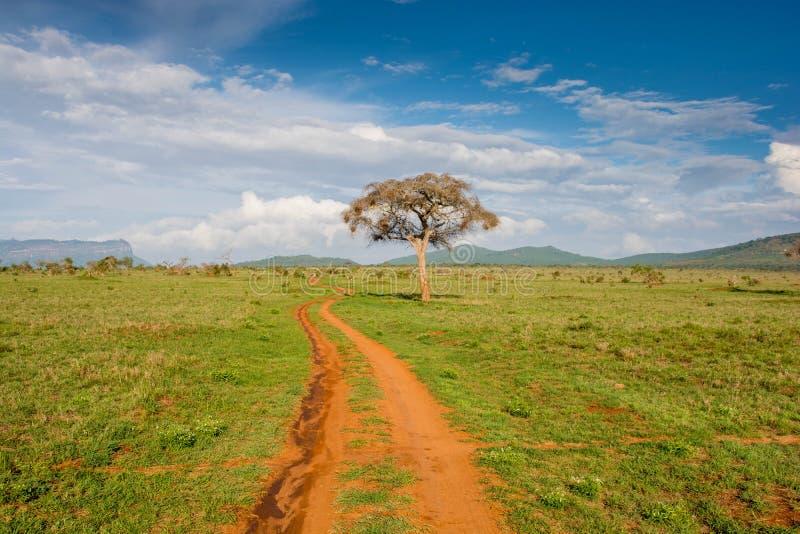 Tsavo west national park in Kenya. Kenya safari. Tsavo west national park in Kenya. View on beautiful green taita hills after rain season. Kenya safari royalty free stock photo