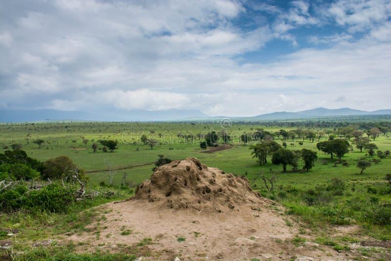 Tsavo west national park in Kenya stock photography