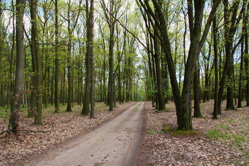Tschechische herrliche Wälder stockbilder